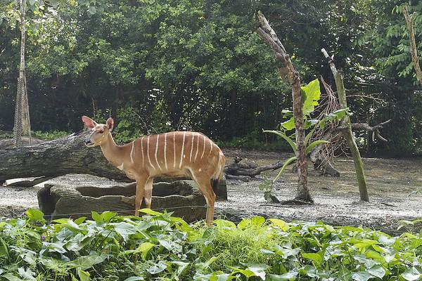Singapore - 7 Zoo